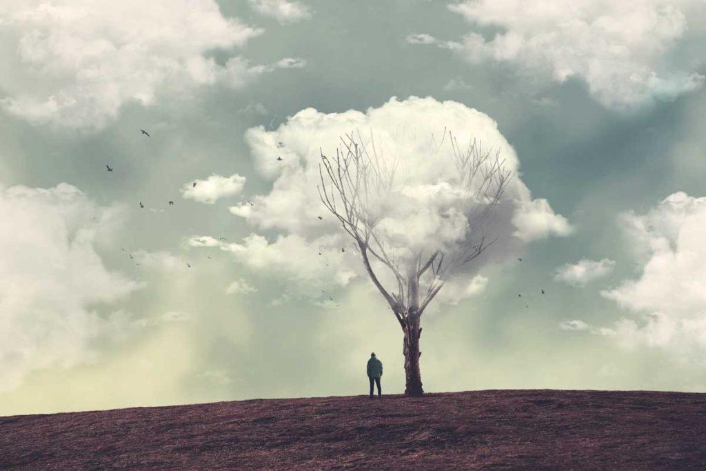 木の上の雲