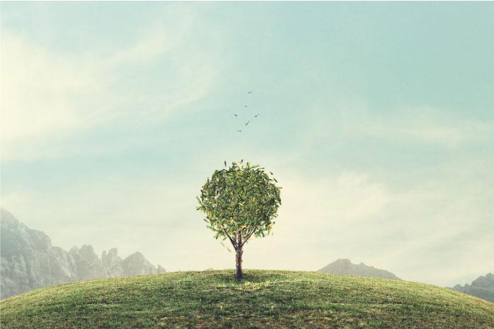 山の天辺に木が植っている写真