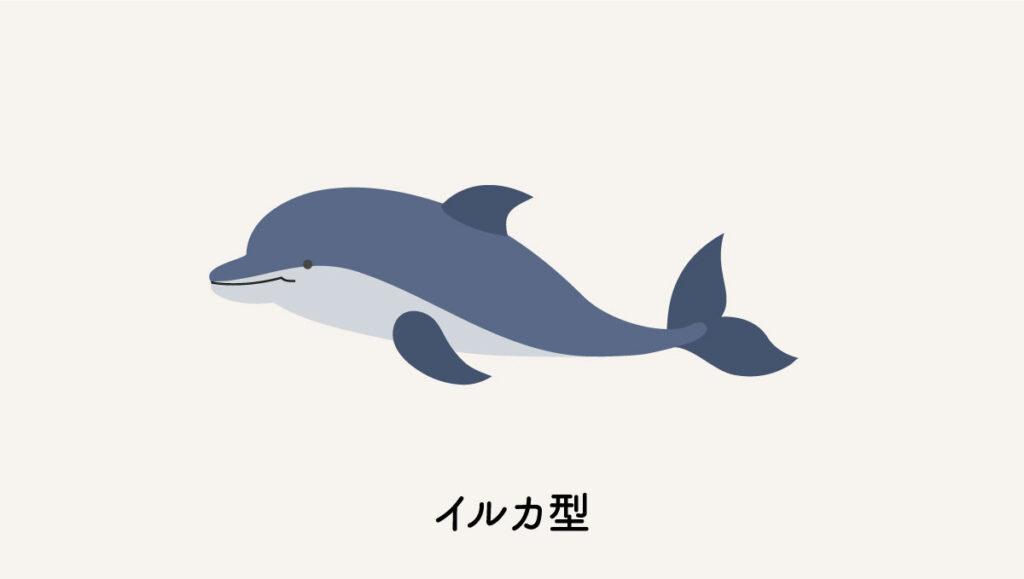 イルカ型のクロノタイプ